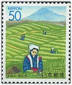 1997年茶摘み