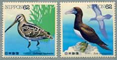 水辺の鳥オオジシギ・カツオドリ