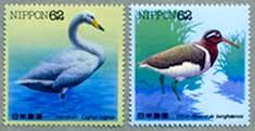 水辺の鳥オオハクチョウ・タマシギ