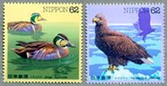 水辺の鳥トモエガモ・オジロワシ