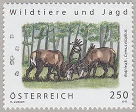 野生動物と狩り「アカシカ」