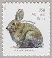 ブラシウサギ