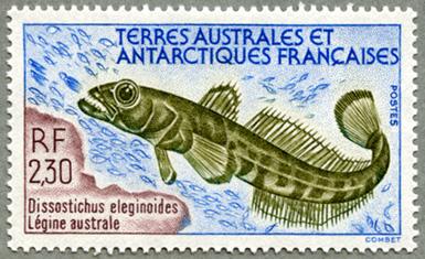 仏領南方南極地方1992年マゼランアイナメ