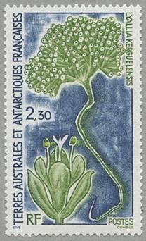 ナデシコ科リアリア族の植物