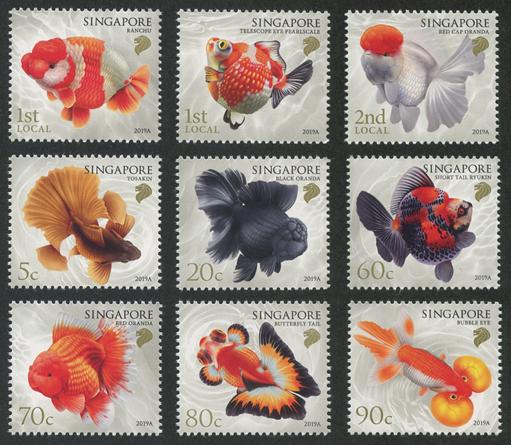 シンガポール金魚9種