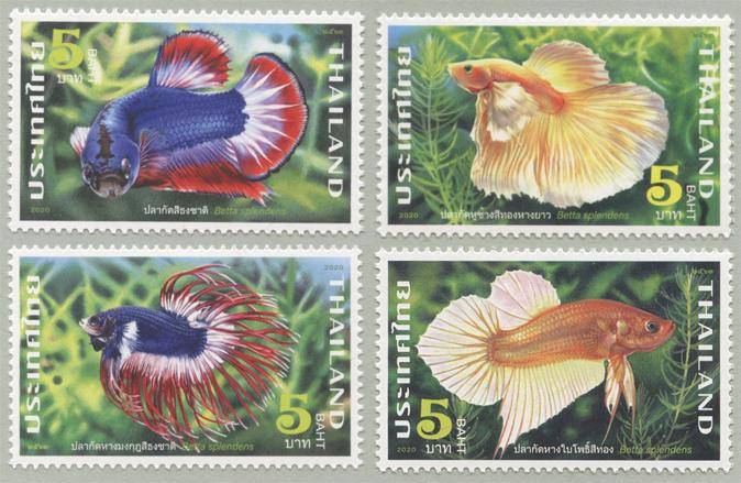 淡水魚ベタ・スプレンデンス4種